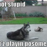 dog-not-stupid-cats-playing-possom