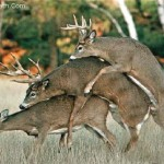 gay-deer-threesome-orgy