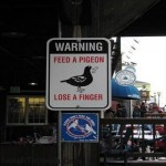 warning_sign_pigeon