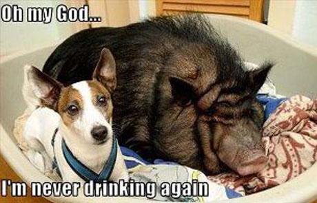 dog never drinking again
